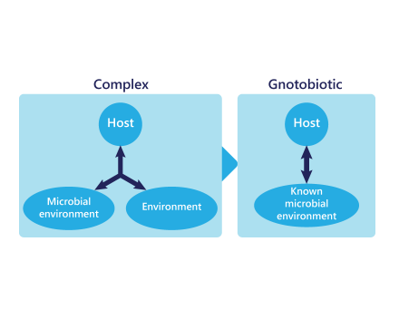 Explanation of gnotobiotic model