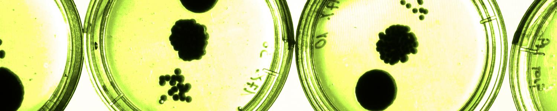In vitro quorum sensing
