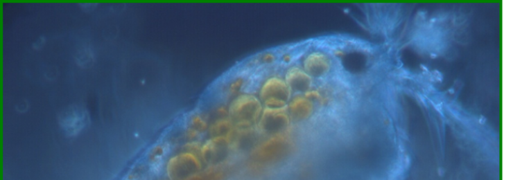 Biochemical profiling of marine organisms