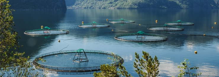 Salmon farm in a fjord in Norway